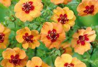 5 fleurs pas chères à planter en hiver