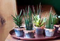 Notre plan de bataille (infaillible) pour des plantes qui vaincront l'hiver !