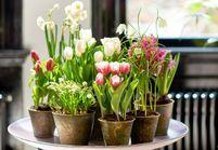 Zoom sur une plante résolument joyeuse : la tulipe