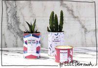 #ELLEDécocrush : un cactus personnalisable pour une déco pleine de piquant !