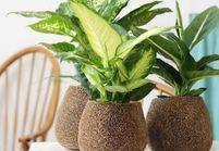 8 plantes détox pour rester zen