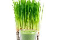 Quels sont les bienfaits du jus d'herbe de blé ?