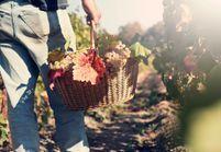 Le vin issu de l'agriculture biodynamique est-il meilleur pour nous ?