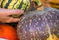 Manger de saison, ça veut dire quoi ?  La réponse des membres du Collège Culinaire de France
