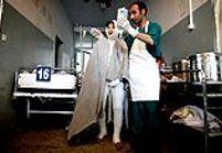 Afghanistan, la tragédie des filles du feu