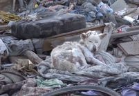 La vidéo du sauvetage d'un chien émeut la toile