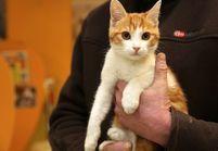 Oscar le chat: un an de prison ferme pour le Marseillais