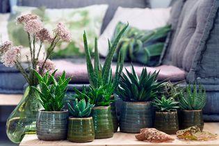 6 plantes increvables pour celles qui n'ont vraiment pas la main verte