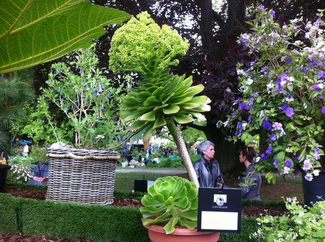 Courson : les 20 plantes les plus originales de l'année