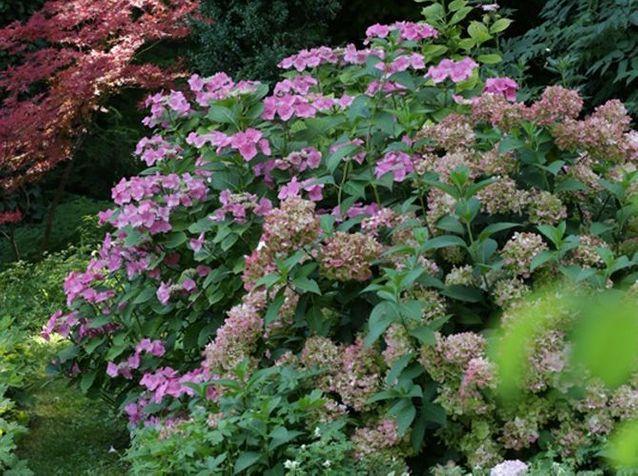Massif fleuri varié