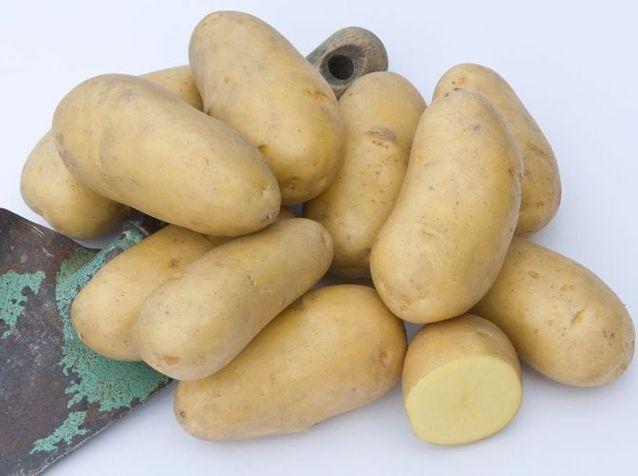 Les pommes de terre charlotte