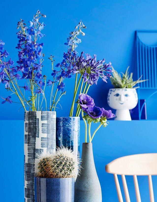 La plante idéale pour le Bélier : le cactus
