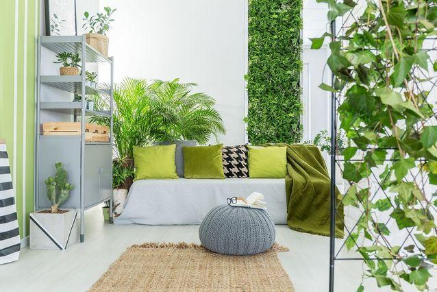 Grandes plantes d'intérieur - banquette