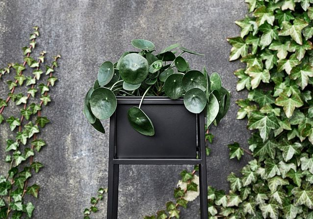Top 5 des plantes les plus en vogue sur Instagram