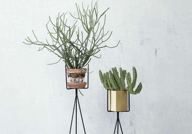 Dans la déco, il y a des cactus