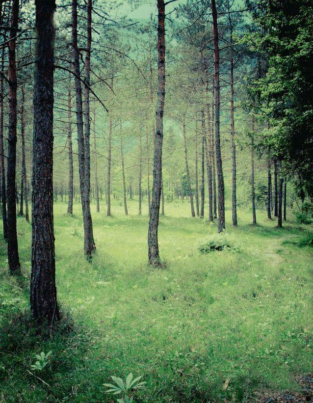 Photographie de la forêt
