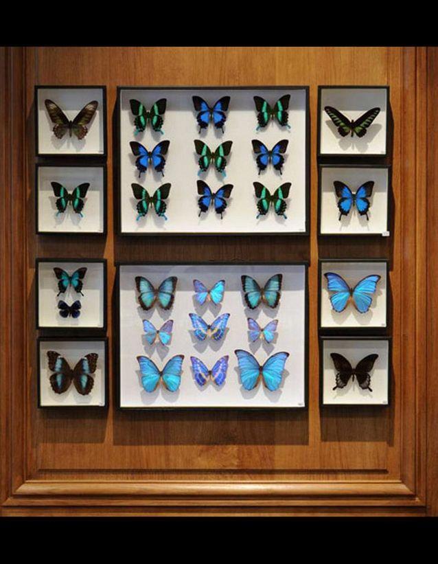 Boîtes Entomologiques Deyrolle