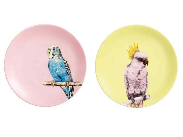 Des assiettes avec impression perroquets plus vrais que nature