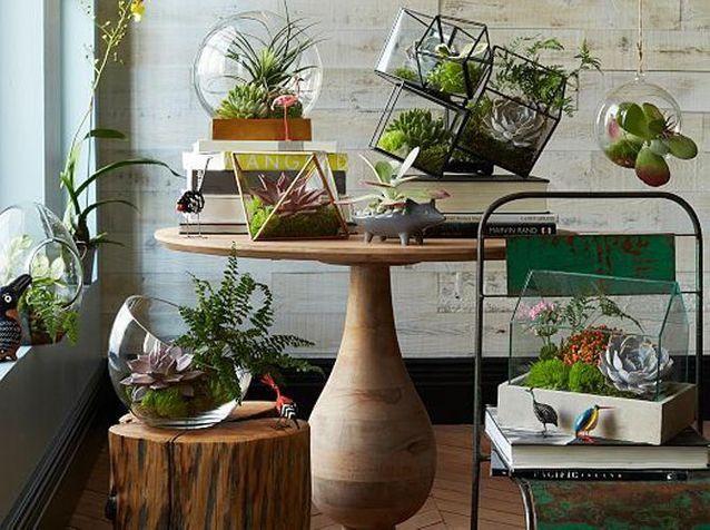 Terrariums : découvrez ces mini-serres ultra déco !