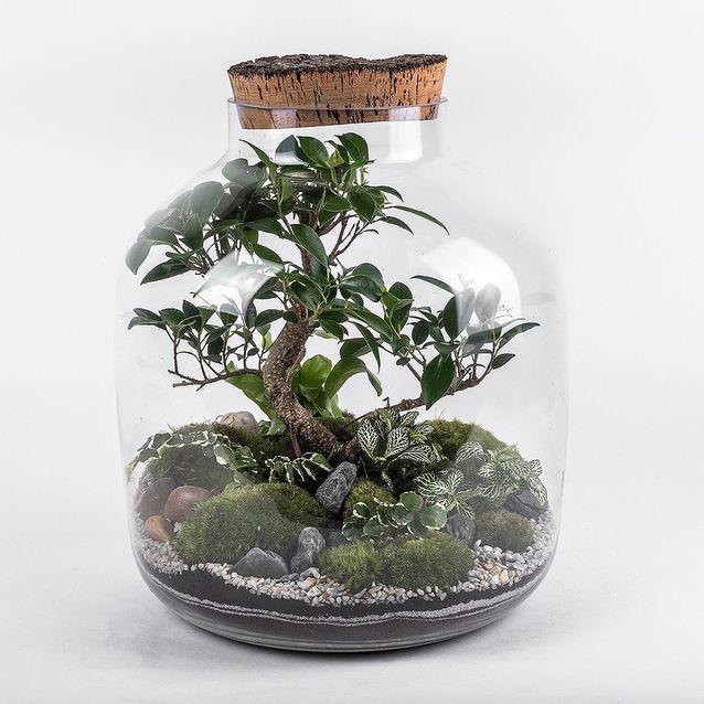 Terrarium pour bonsaï