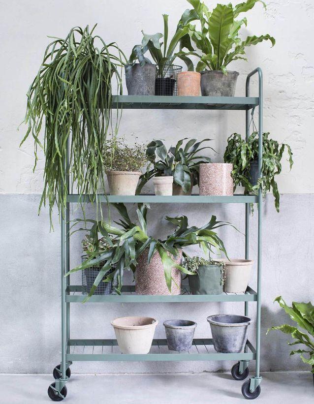 Un jardin d'hiver mobile via des plantes posées sur un grand meuble à roulettes
