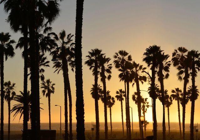 Los Angeles : nos meilleures adresses déco