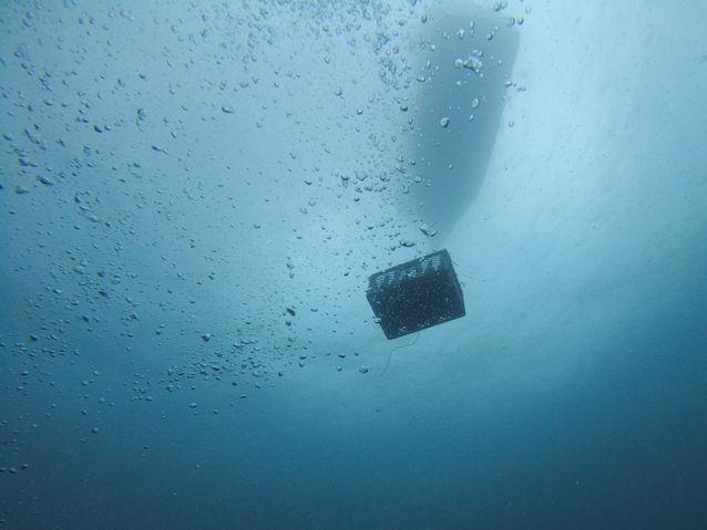A la découverte des caves sous-marines Mare & Gustu