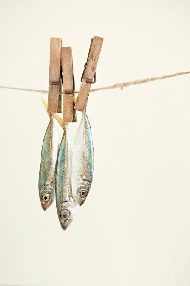 Aliment Pas Cher Sardines En Boites Comment Manger