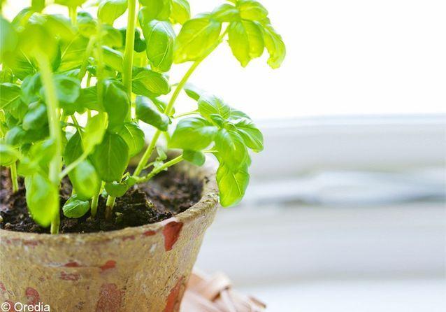 Coaching : mes plantes aromatiques sans jardin