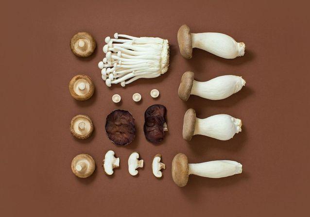 Choix, préparation, cuisson : tout savoir sur les champignons
