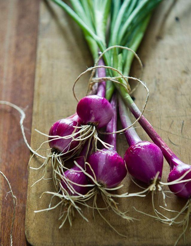 Bouquet de petits oignons rouges