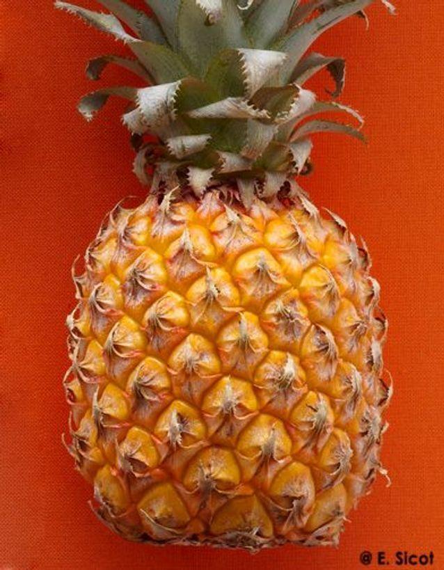 Ananas au poivre long