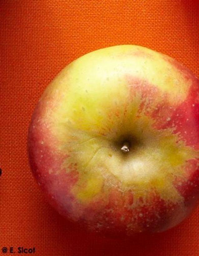 Pommes et poires confites façon tatin