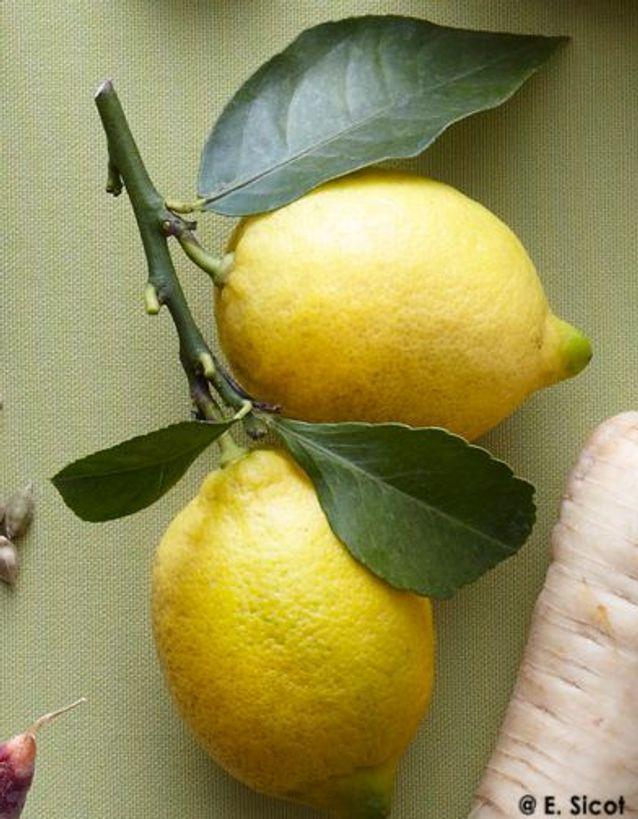 Tanjia de veau au citron confit