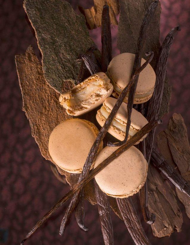 Macaron dans les bois Pierre Hermé