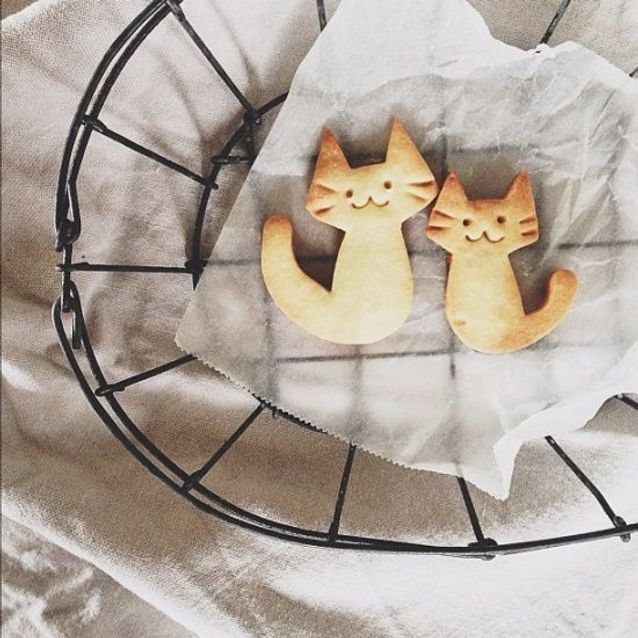 Biscuit chat