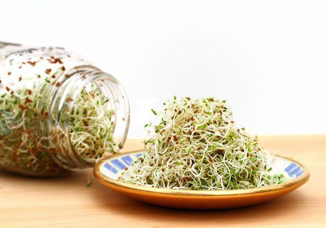 Les graines à germer