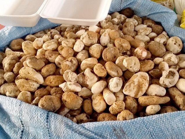 Pommes de terre déshydratées