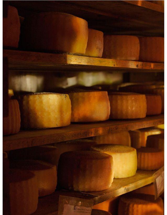 Les fromages naturalistes de Gregorio Rotolo