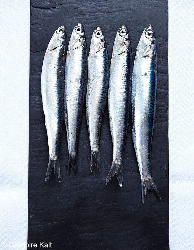 Avec des anchois frais