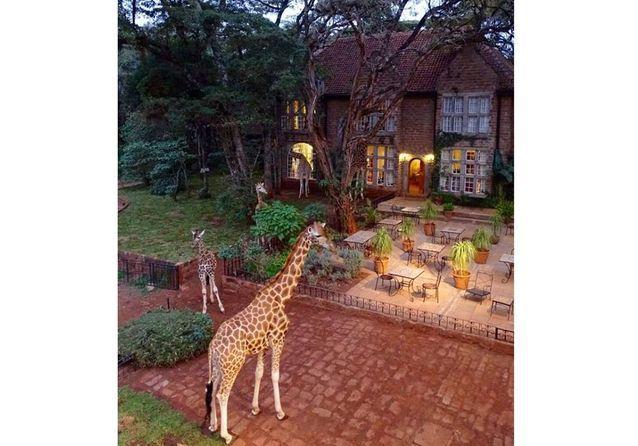 Le Manoir des Girafes, au Kenya