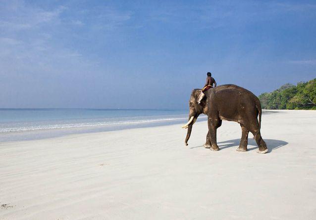 Balade à dos d'éléphant sur la plage.