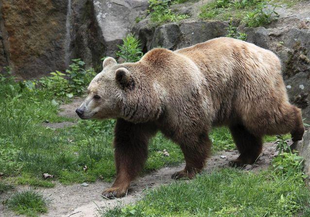 Rendez-vous avec les ours