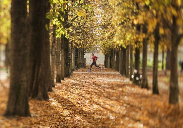 Dans le jardin des Tuileries, à Paris