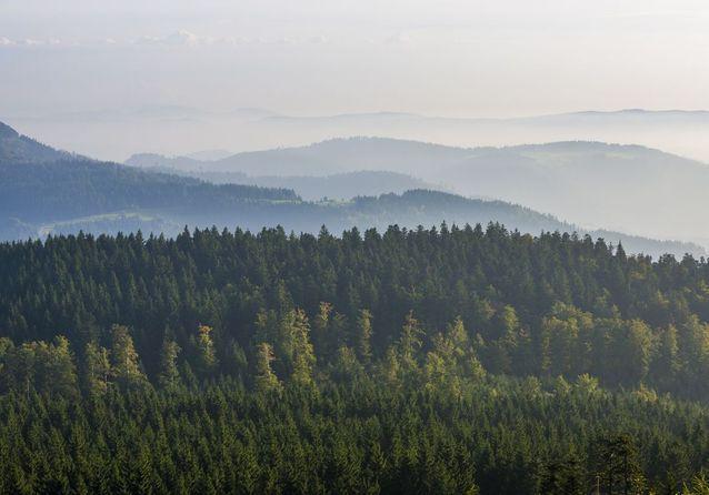 La Forêt Noire, en Allemagne