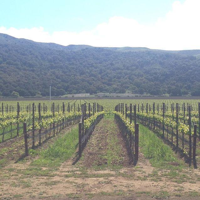 Les domaines viticoles