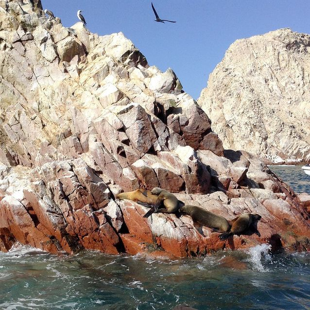 Observer la nature sauvage des Iles Balestas