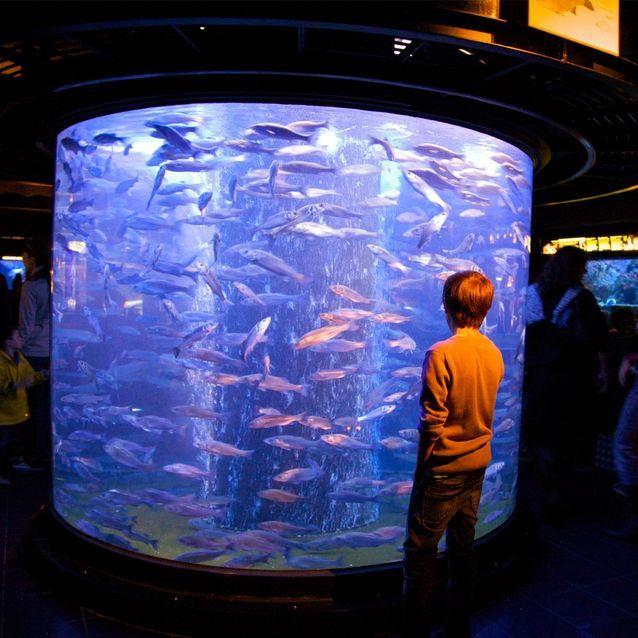 Monaco : une expédition sous-marine au Musée Océanographie