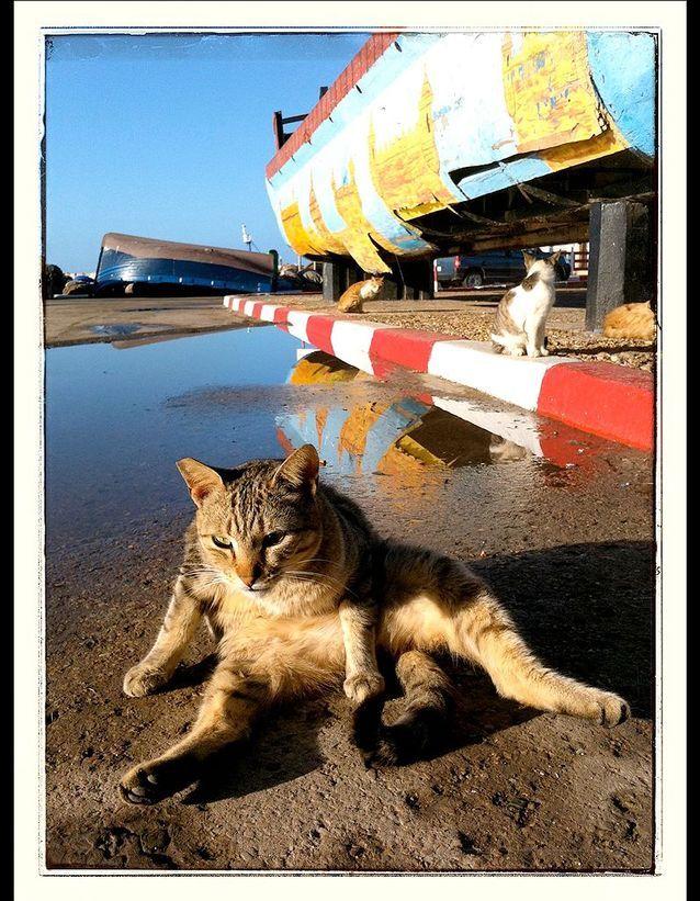 Les chats dans la médina