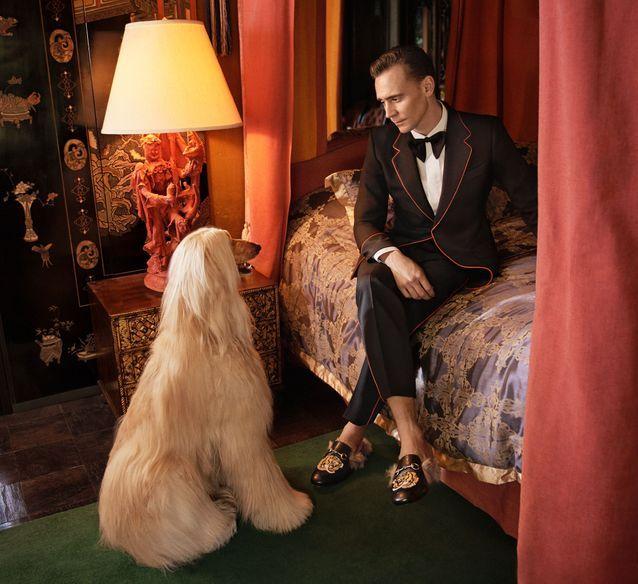 Tom Hiddleston pour Gucci